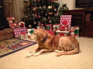 Jodie Christmas 2013