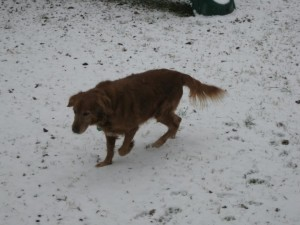 Jodie in the snow